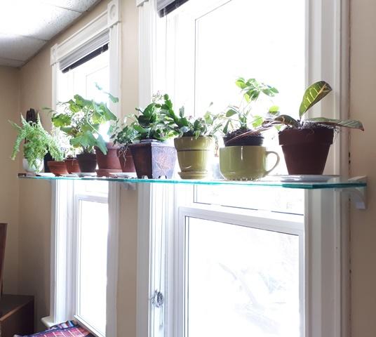 182b7c425579 Small Green Plants – Glass Shelf in Window – KW Professional Organizers – Kitchener  Waterloo